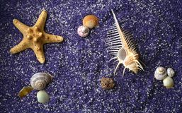Sea shell and starfishes on lilac sand. Background Stock Images
