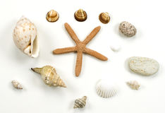 Sea shell and stone collection Royalty Free Stock Photo