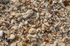 Sea shell and stone pieces texture. Sea sand texture made of shell and stone pieces Stock Images