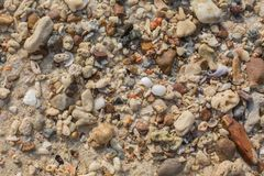Sea shell and stone pieces texture. Sea sand texture made of shell and stone pieces Royalty Free Stock Images