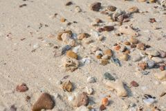Sea shell and stone pieces texture Stock Image
