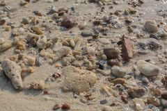 Sea shell and stone pieces texture Royalty Free Stock Image