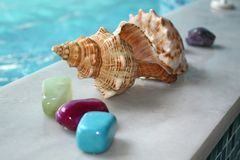 Sea shell and stones Stock Photo