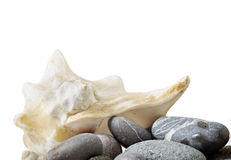 Sea shell and stones collection Royalty Free Stock Image