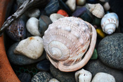 Sea shell stones making background Royalty Free Stock Photo