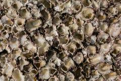Sea shell Texture. On the stone. Coast. Beach Royalty Free Stock Photography