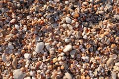 Sea shell texture. Sunset colour royalty free stock image
