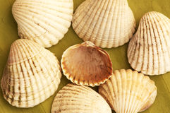 Sea shell theme Stock Image