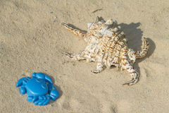 Sea shell and toy. Crab on the beach sand royalty free stock photos
