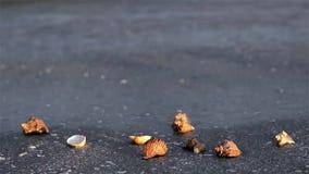 Sea shell stock footage