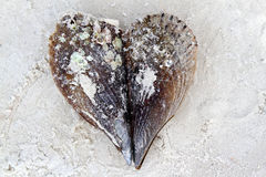 Sea shell valentine heart Royalty Free Stock Photo