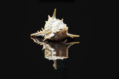 Sea Shell variety Royalty Free Stock Images