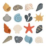 Sea shell vector icons in cartoon style. Set of mollusc. Ocean cockleshell. Sea shell vector icons in cartoon style. Set of mollusc. Ocean cockleshell vector illustration