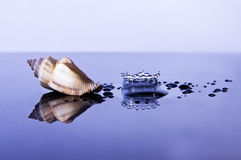 Sea Shell and Water Splash Royalty Free Stock Image