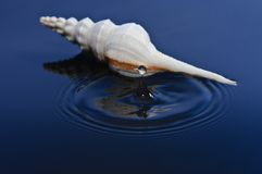 Sea Shell and Waterdrop Stock Photos