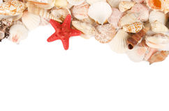Sea shell on a white Stock Photo