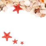 Sea shell   on a white Stock Photos
