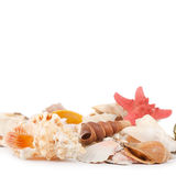 Sea shell on a white Royalty Free Stock Photos