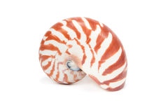 Sea Shell on white background Royalty Free Stock Photography