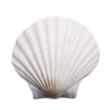 Sea shell on white background Royalty Free Stock Photo