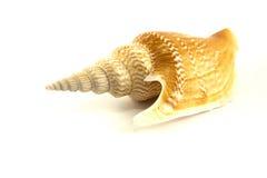 Sea shell on white background Royalty Free Stock Photo