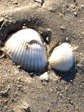 The sea shell Stock Image