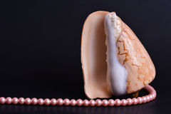 Sea shell and white beads Royalty Free Stock Image