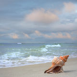 Sea Shell on White Sand Beach Royalty Free Stock Images