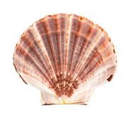 Sea shell on white. Background stock photography