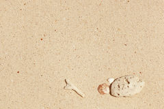 Sea shell and white stone on sand Royalty Free Stock Image