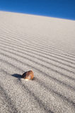 Sea Shell on wind blown sand lines. A single Sea Shell sitting on wind blown beach sand lines Royalty Free Stock Photography
