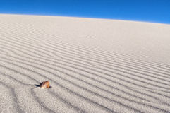 Sea Shell on wind blown sand lines. A single Sea Shell sitting on wind blown beach sand lines Stock Photos