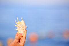 Sea shell in the woman`s hand on blurred background sea Royalty Free Stock Image