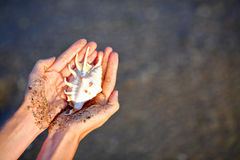 Sea shell in the woman`s hands illuminated sun royalty free stock photography
