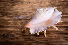 Sea shell Stock Photos