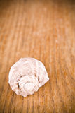 Sea shell on wooden background Stock Images