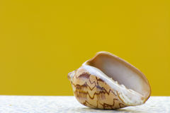 Sea shell on a yellow background. Stock Photos