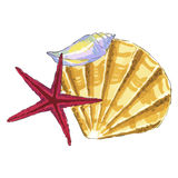 Sea shell in yellow and red colors Royalty Free Stock Image