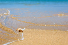 Sea shell on the yellow sandy beach Royalty Free Stock Photos