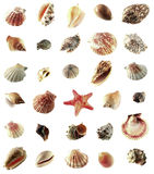 Sea shells. Isolated on white background royalty free stock image
