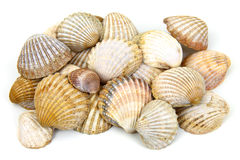 Sea shells. Isolated on white background Stock Images