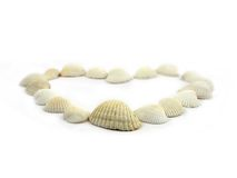 Sea shells. On white background royalty free stock photo