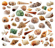 Sea-shells. The many different sea-shells isolated on white Stock Image