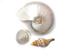 Sea shells Stock Photography