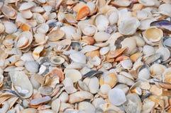 Sea Shells Royalty Free Stock Image