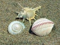 Sea shells. On the beach Stock Photo