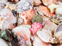 Sea shells. In a bowl Stock Photo