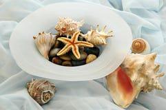 Sea Shells. And rocks on blue silk Stock Image
