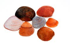 Sea shells. A group of nicely colored and textured sea shells stock photo