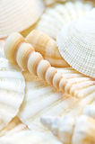 Sea shells. Collection of pastel sea shells stock image